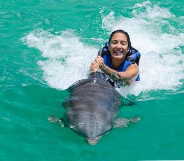 Nadar Golfinhos