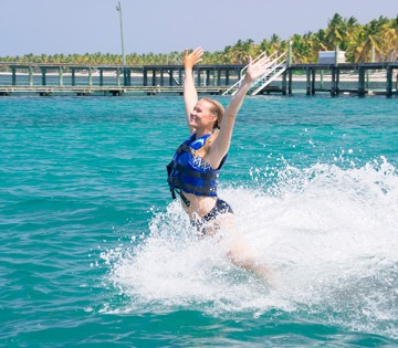 nado com dois golfinhos e tubarões